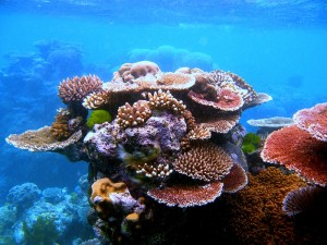 Great danger for the Great Barrier Reef