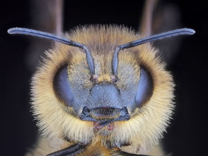 The Health of the Honey Bee