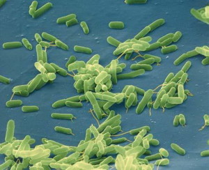 Microbiota and us – we feed our bacteria even when we are sick!