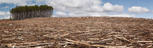 Deforestation – How far will we go for profit?