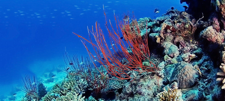 How Your Sunscreen Poses a stop Real Threat to Coral Reefs